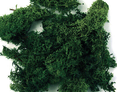 Green Icelandic Moss 100g Bag for Floristry Crafts