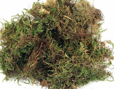 Dried Moss 100g Bag for Floristry Crafts | Floristry Crafts Flower Arranging