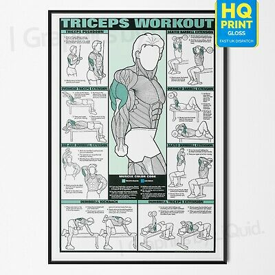 TRICEPS WORKOUT Professional Arm Weight Training Fitness Poster | A4 A3 A2 A1 |