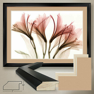 SET by STEVEN MEYERS XRAY PHOTO 2PC CANVAS and WILLOW WIND 30x24 30x24