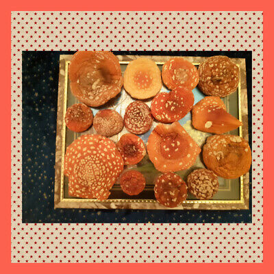 Amanita red 30 gr-gifts of the forest decoration caps 2019