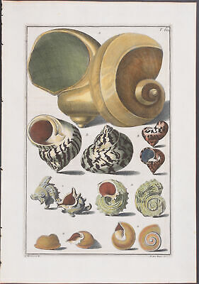 Gualtieri - Shells. 68 - 1742 Index Testarum Conchyliorum 1ST EDITION
