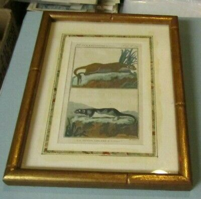 Otters of Guyana & Canada 19th Century Hand Colored French Book Plate Art Print