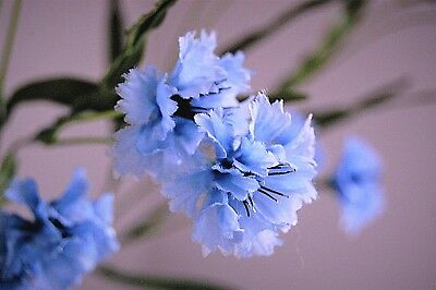 """12 Vintage Dusty Blue """"Mini Carnations"""" on two 19"""" Stems - JaNice Interiors"""
