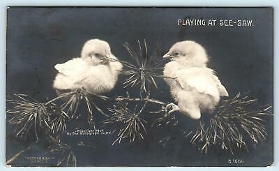 RPPC   2 BABY CHICKS PLAYING SEE SAW  Tree Branch 1907  Rotograph Photo Postcard