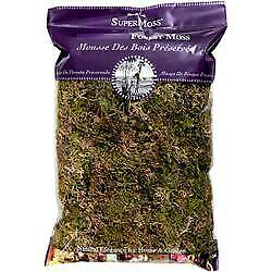 Forest Moss Dried 8oz-