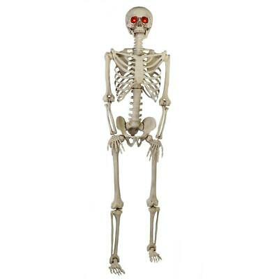 Poseable Skeleton Halloween Prop 5 ft. LED Eyes Lightweight Easy to Hang Hanging
