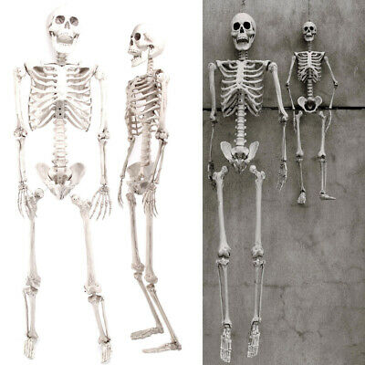3ft / 5.6ft Halloween Human Skull Skeleton Full Size Haunted House Tricky Props