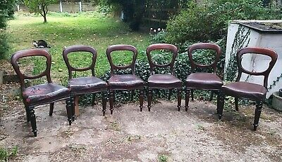 6 Antique Victorian Balloon Back Set of Dining Chairs  Mahogany Refurb Project