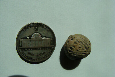 Ancient Manabi Pre-Columbian FISH Ceramic Spindle Whorl Bead 500BC - 500AD Ecuad