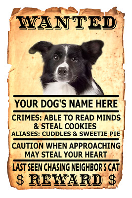 Border Collie Dog Wanted Poster Flex Fridge Magnet Personalized Photo Art