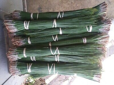 longleaf pine needles green 17 lbs 14 to 18 inches