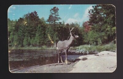 1c stamp 1950 postmark The Sentinel background of lake & forest this buck was pc