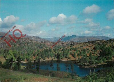 Picture Postcard__English Lake District, Tarn Hows Near Consiton, Langdale Pikes
