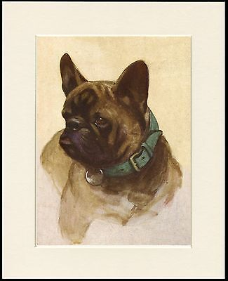 FRENCH BULLDOG LOVELY DOG HEAD STUDY PRINT MOUNTED READY TO FRAME