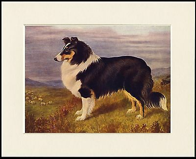 Rough Collie Guarding Flock Lovely Little Dog Print Mounted Ready To Frame