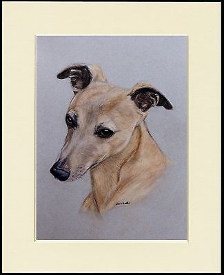 Whippet Lovely Little Head Study Dog Print Mounted Ready To Frame