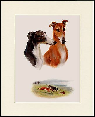 Greyhound Lovely Dog Head Study Print Mounted Ready To Frame