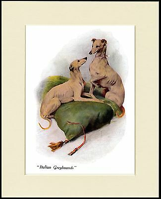 Italian Greyhound Two Little Dogs Lovely Dog Print Mounted Ready To Frame