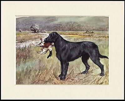 FLAT COATED RETRIEVER HEAD STUDY WITH PHEASANT DOG PRINT MOUNTED READY TO FRAME