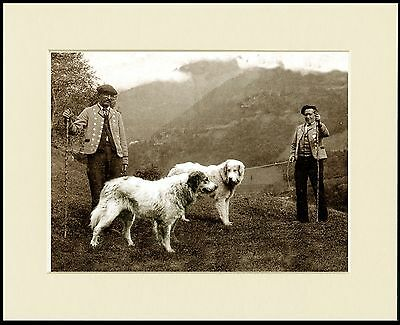 Pyrenean Mountain Dog Alpine Scene Men And Dog Print Mounted Ready To Frame
