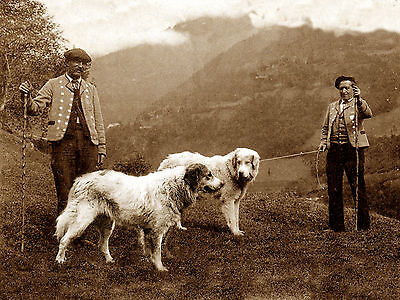 Pyrenean Mountain Dog Men And Dogs Old Sepia Image On Greetings Note Card