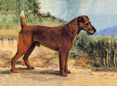 IRISH TERRIER TWO DOGS IN RURAL SETTING CHARMING DOG GREETINGS NOTE CARD