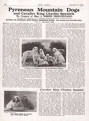 Pyrenean Mountain Dog King Charles Advert Print Page Our Dogs 1944 De Fontenay