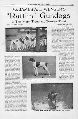Pointer Our Dogs 1934 Dog Breed Kennel Advert Print Page Rattlin Kennel