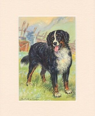 Dog Art,Pencil,Paint,Ink,Bernese Mountain Print PKUfnal