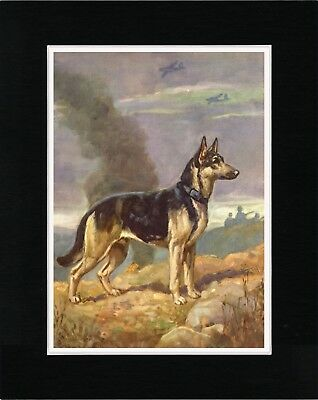 WOUNDED SOLDIER AND GERMAN SHEPHERD RED CROSS WAR DOG OLD STYLE PRINT MATTED