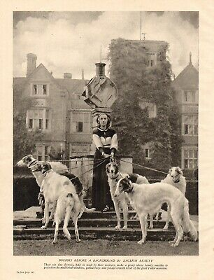 BORZOI ORIGINAL VINTAGE 1930's DOG PRINT PAGE LADY WITH LOVELY GROUP OF DOGS