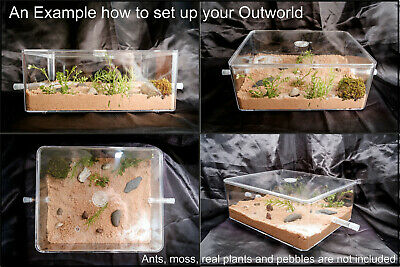 X Large Ant Spider Arena Formicarium Farm Ant Housing Ant Colony Outworld Set