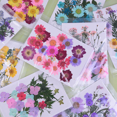Pressed flower mixed organic natural dried flowers diy art floral decors gifPTJ