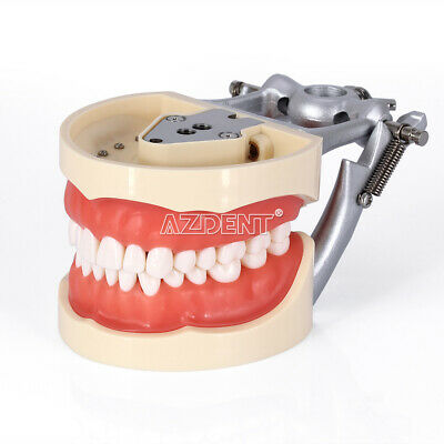 UK Kilgore NISSIN 200 Type Teeth Dental Typodont Teeth Model Removable Teeth