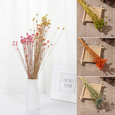 Kawaii Happy Flower Dried Flowers Bouquets Real Flower Plant Stems Natural NEW