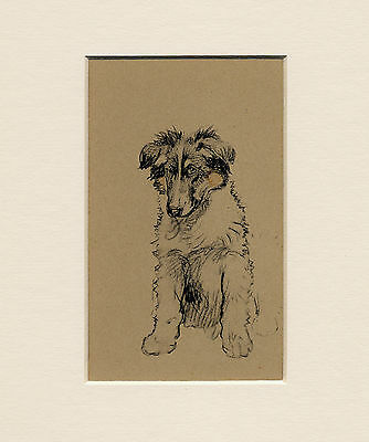 Rough Collie Puppy Lovely Little 1930'S Cecil Aldin Dog Art Print Ready Mounted