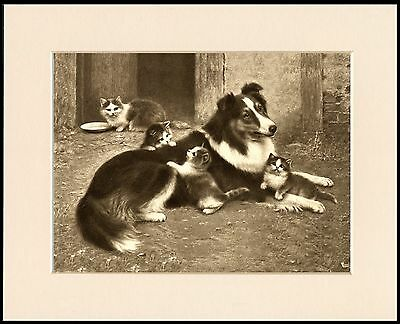 BORDER COLLIE GREAT DOG FOOD ADVERT PRINT MOUNTED READY TO FRAME