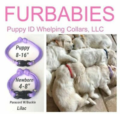 FURBABIES-Puppy ID Whelping Collars (Newborn + Puppy Size) Paracord Buckled