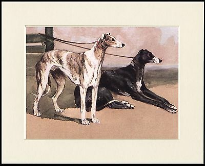 Greyhound Two Dogs Lovely Dog Print Mounted Ready To Frame