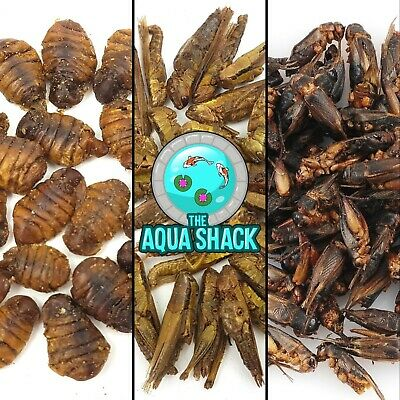Natural Bird Food Wildlife Crickets Hoppers Silkworms UK Garden Parrots Treats