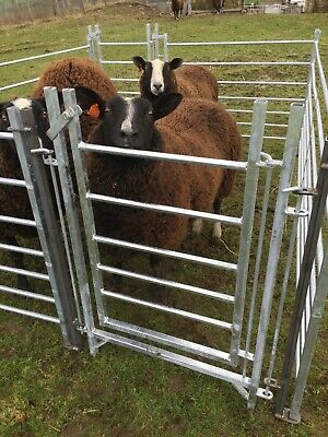 NEW HOT DIP GALVANISED SHEEP HURDLE PASS GATE FULLY WELDED ACCESS GATE 2 ft