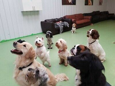 Dog Daycare Centre For Sale (5 Star Council Rated, Well-Established)