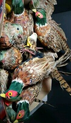 Vintage Feathered Pheasants and Birds