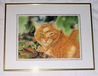 Orangy Cat Pencil Signed Drew Strouble Framed Print
