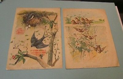 Family of Swallows Group of Sparrows Victorian Art Color Bird Print Pair 6x8