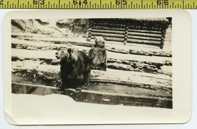 Vintage 1940's photo / Bellicose Beer Belly Bubba BEARS Bellow Babble Butt Burps