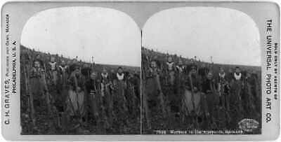 Photo:Workers in the vineyards,Germany,women & girls,c1900