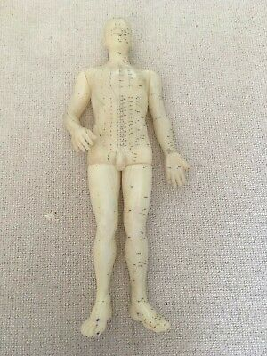 Acupuncture male point model Chinese no stand.