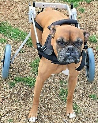 Best Friend Mobility Dog Wheelchair Medium BFMM
